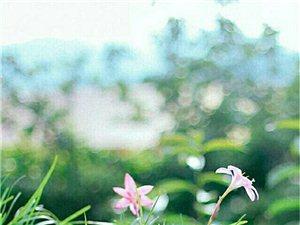 窗台上有花,你看书我画画,就这样走过了夕阳。(深夜语录)