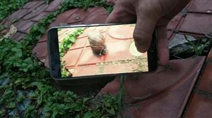 我是一只小小的蜗牛