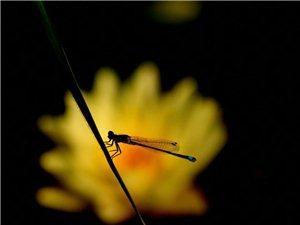 早有蜻蜓立上头一一石门小烧