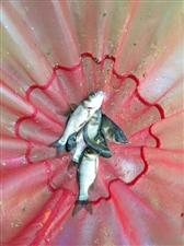 家有喜事,出杆有限,直接上鱼获图了