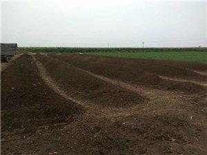汤阴本地绿色有机肥厂家直销