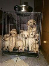 泸县爱宠之家宠物店