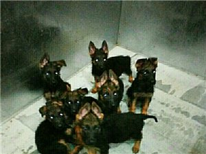 �B狗的人越�碓缴佟Uf明治安好了。
