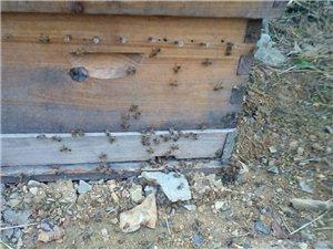 中秋佳节回娘家,土蜂蜜来送爸妈。天然绿色