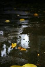 暗夜,下过雨的街,空气里飘散着水果腐烂的