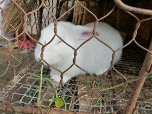 嫦娥的大白兔流落民间了