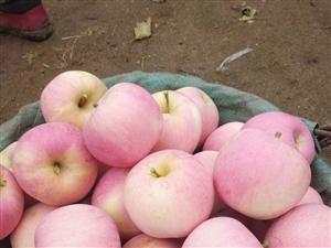 自家果园采摘新鲜水果开卖啦