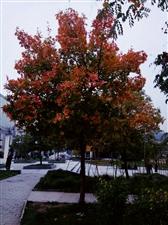 这个秋天,愿时光多一些明媚
