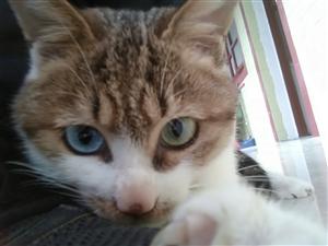 想领养一只猫