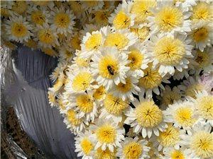 花的世界,花的海洋,香味扑鼻