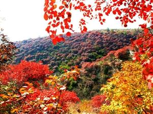 蒙山红叶谷