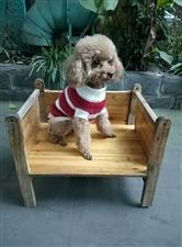 悬赏1000-寻狗启示,请好心人帮帮忙,如还回狗狗,酬金1000元(图片)