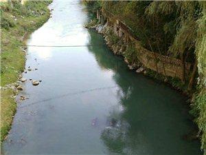 天气热活了,一司机昨晚把车开到大湾河里面
