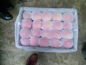 泸县苹果批发价销售