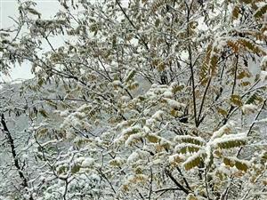 今天下雪了,不由想起2016年的罕见暴雪