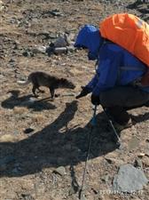 偶遇野狐,于五台山