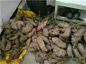 收购紫色大薯:0.5~3斤左右最佳,500斤左右,有意者请联系