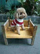 寻狗启示,麻烦捡到它的朋友能归还,如还回狗狗,酬金1000元(图片)