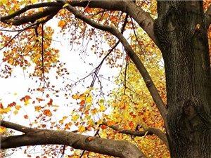 我的思念在秋天田野-麦子――作品选