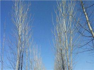 蔚蓝的天空下是宁静的乡村小路