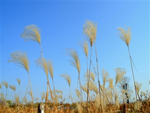 天汉湿地公园冬季美景