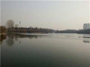 冬至的月湖,好美的一副水墨画
