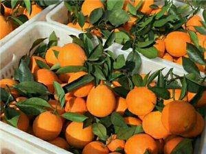 水源��背有1万斤左右的脐橙出售,果品匀称,有意者请联系