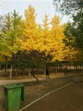 美丽的北京