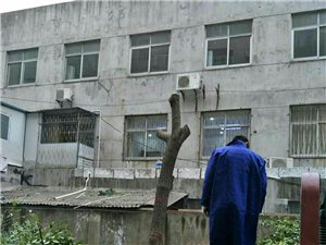网友报料:国家园林城,砍树好随意!