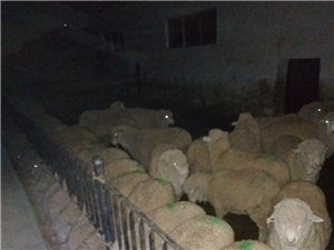 羊肉批�l�r