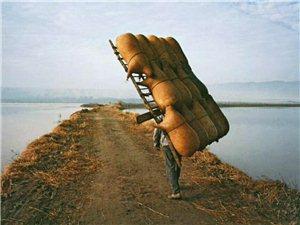 东荒诗团: 我从巴颜喀拉 一路狂奔(组诗)/陕北农民诗人徐满升