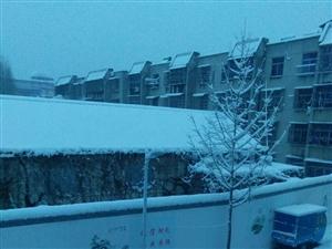 早上起床看见我们小区的雪景