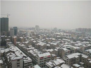 雪儿如期而至