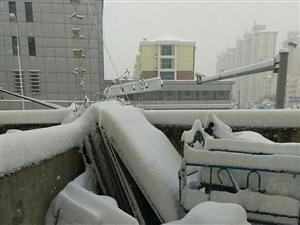 我家阳台上的吊兰雪花很优雅