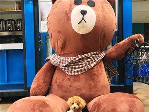 請看到這條棕色的泰迪聯系我謝謝