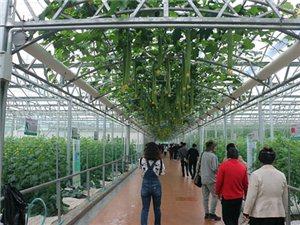 游览山东寿光蔬菜长廊
