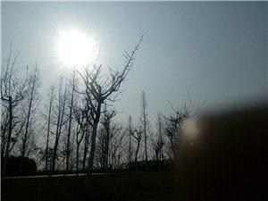 【原创诗歌】在阳光下(冬日篇)