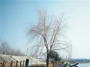 兰考黄河湾风景区①
