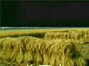 我的家乡在东北澳门太阳城官网好米稻花香!