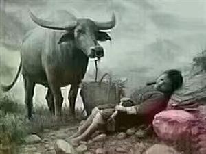 突然好想去放牛,没有生活压力,没有江湖套