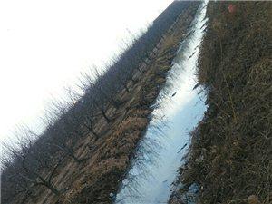 照旺庄叶家泊村西流入富水河