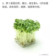 凌源绿山谷芽苗菜