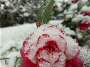 腊八又逢小雪