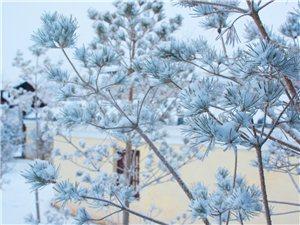 下雪已经过去好几天了,下雪那天天还没有亮