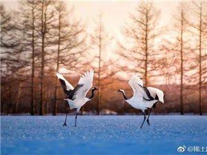 世界大湿地,中国鹤家乡