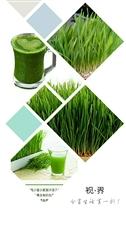 真正的健康有机活体蔬菜!