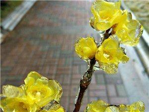 大美宁乡水晶花
