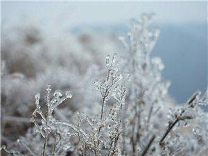 冬行天鹅山,观赏雪景之美