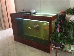 换鱼缸老缸出售,去年1月份购买。