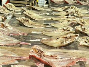 红鱼,马友,金鲳,龙利,大量晒干了,今年